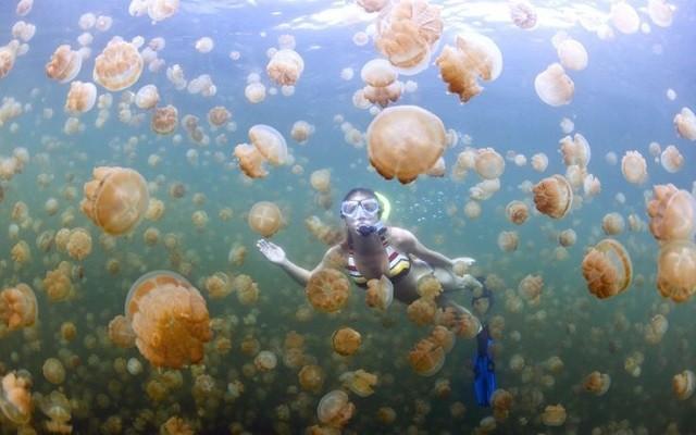 マカラカル島のジェリーフィッシュレイク