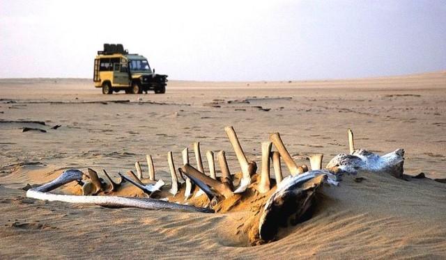 ナミビアのスケルトンコースト
