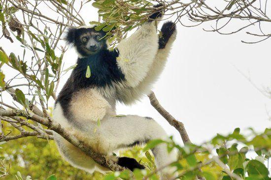 マダガスカルペリネ特別保護区33