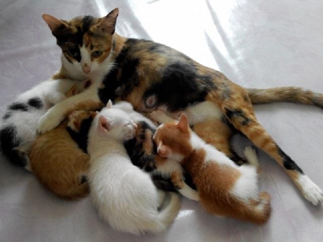 ネコの子育て
