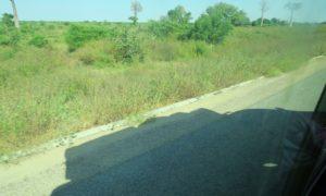 マダガスカル(3)私のお尻の痛みを無視してブルースは加速してゆく