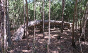マダガスカル(6)「ミギーのバオバブ」が教えてくれた、それぞれの道徳