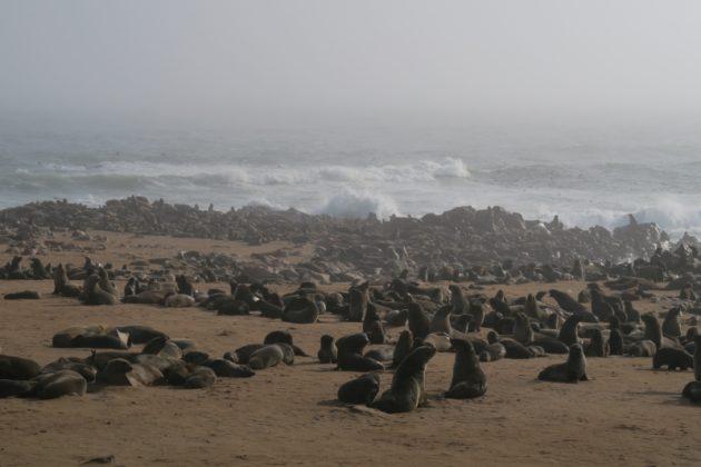 ケープクロス・ナミビア・Cape Cross