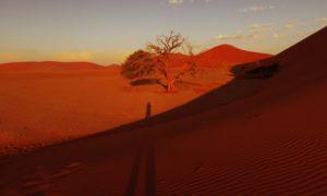 ナミビア(3)【ナミブ砂漠2】世界一セクシーな夕日を堪能@DUNE45