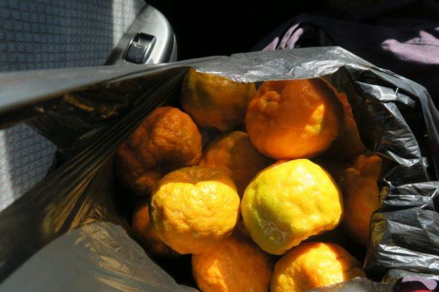モザンビーク_オレンジ