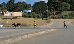 スワジランド(2)首都なのにのんびりなムババーネでモザンビークビザ取得