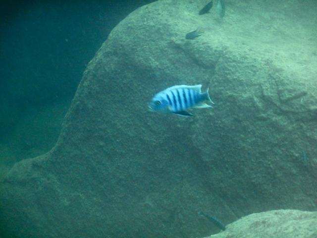 リコマ島_ダイビング