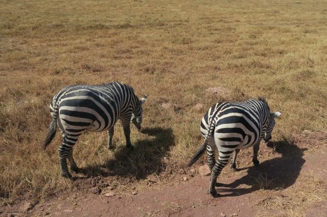 ンゴロンゴロ保全地域の画像 p1_18