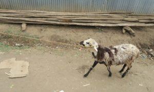 エチオピア(22)アリ族村にて「ライフシェア」を考える大晦日の夜