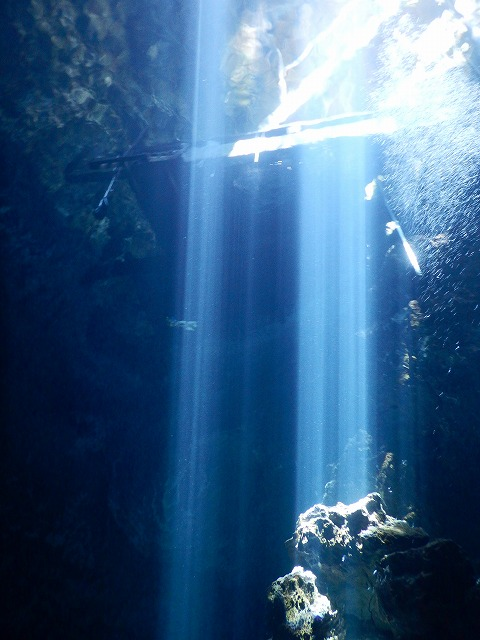 THE PIT_cenote_,exico_ザピット