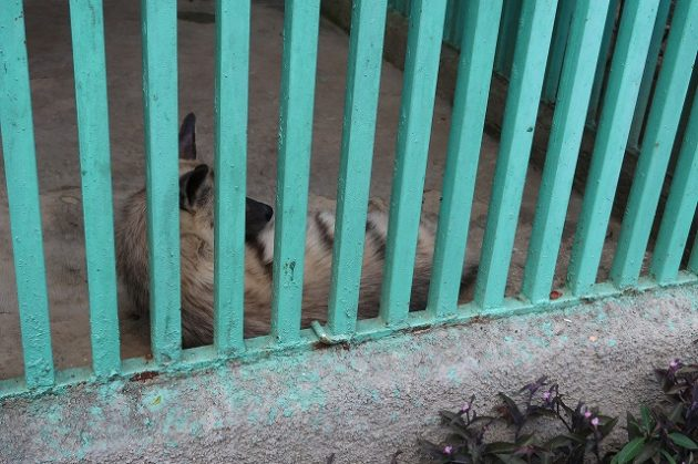 キューバ_動物園