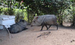 キューバ(28)カマグエイの動物園でキューバのポテンシャルを見た