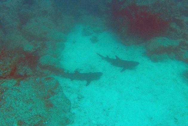 コイバ島_ダイビング