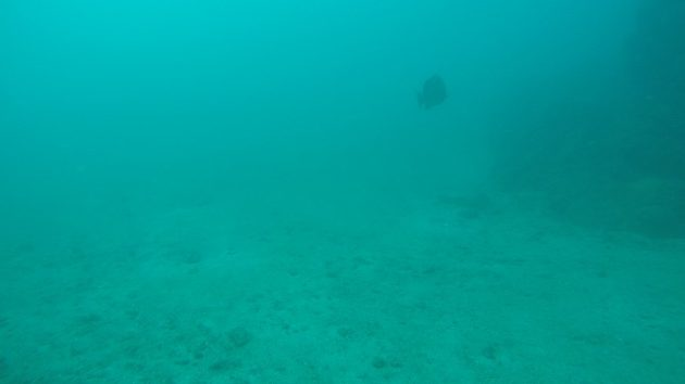 カーニョ島_ダイビング