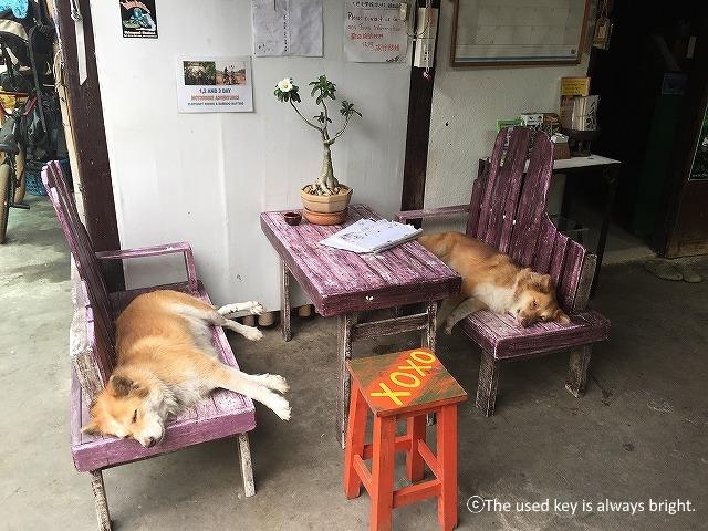 チェンマイのSDTホーム