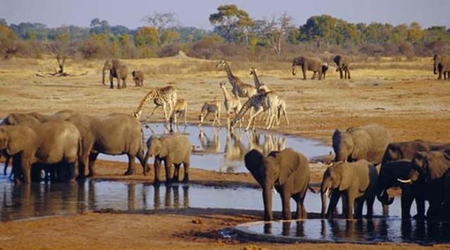 ナミビアのエトシャ国立公園