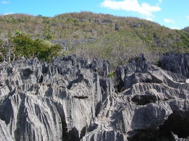 マダガスカルアンカラナ特別保護区のツィンギー
