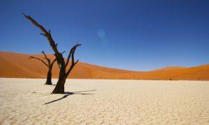 ナミビアでやりたい 5つのこと