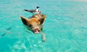 かわいい生き物と一緒に泳げる5つのスポット