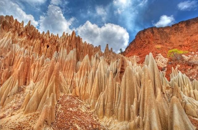 マダガスカルアンカラナ特別保護区のレッドツィンギー