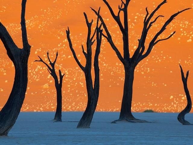 ナミブ砂漠のデッドフレイ