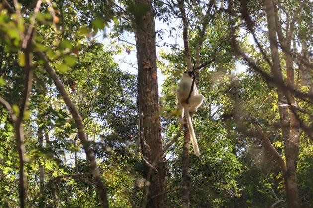 モロンダバ_キリンディー森林保護区