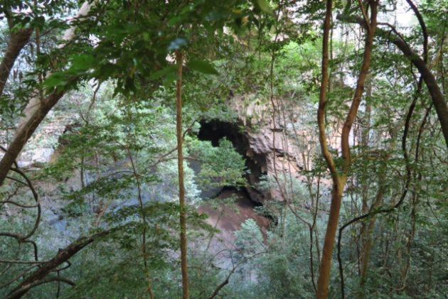 ツィンギー_アンカラナ特別保護区