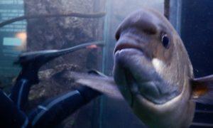 南アフリカ(5)水族館でダイビングというチート行為@ケープタウン