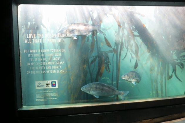 ケープタウン_水族館