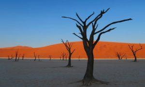 ナミビア(4)【ナミブ砂漠3】ついに到達! 憧れのデッドフレイの朝焼け