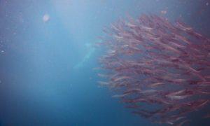 南アフリカ2(5)無意味な寒さ対策と小さなベイトボールおよびサメ