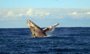 南アフリカ2(6)「ぬるま湯を飛び出せ」とクジラが言った@サーディンラン