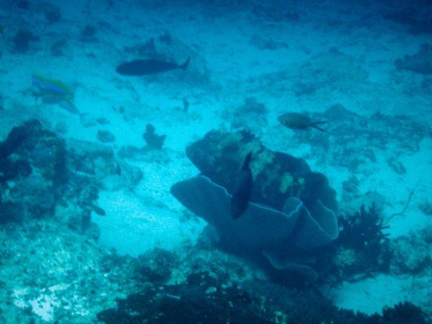 ムネンバ島_ダイビング