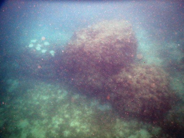 マフィア島_ダイビング_スノーケリング_Mafia_Diving