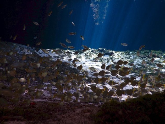 Cenote Zacil-Ha(セノーテ サシルハ)