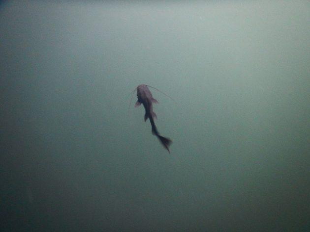 Cenote IK KIL(セノーテ・イキル)