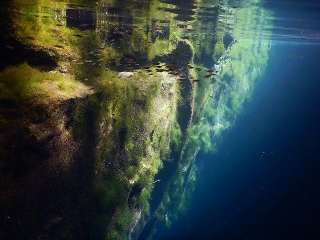 Cenote Oxman(セノーテ オシュマン)
