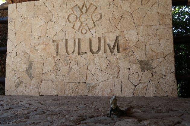 トゥルム_イグアナ