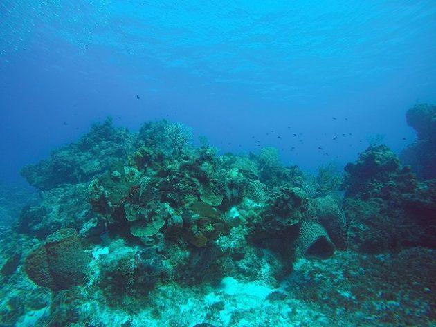 cozmel_diving
