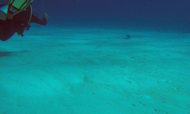 コスメル島_ダイビング