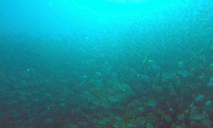 コスタリカ(4)お魚大量発生! ドラケ湾&カーニョ島でダイビング! !